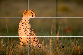 camera composition and tips: Rule of thirds